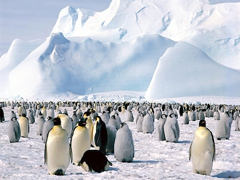 Emperor_Penguins,_Weddell_Sea,_Antarctica.jpg