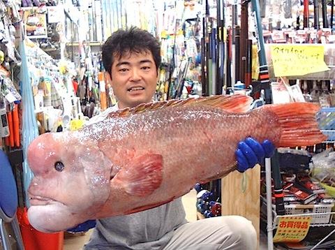 farkfish.jpg