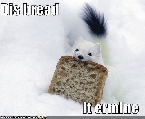 funny-pictures-ermine-eats-bread.jpg