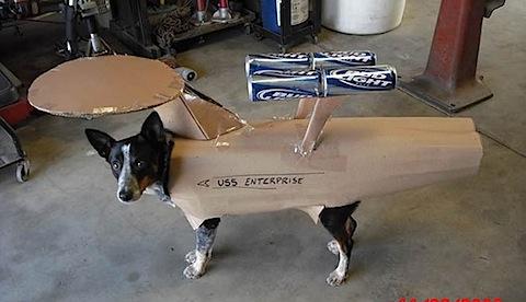 startrekdog-thumb-570x328.jpg