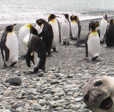 sealruinsphoto.jpg